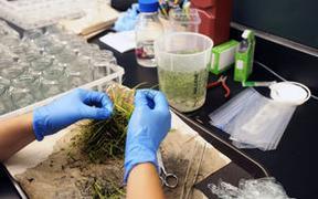 Plant center grows jobs